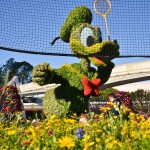 Donald Duck Topiary, photograph by Samantha McElhaney