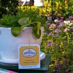 English Tea Garden, photograph by Samantha McElhaney