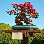 Bonsai Tree, photograph by Samantha McElhaney